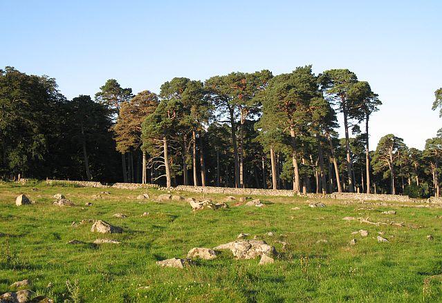 Old Grantown Wood