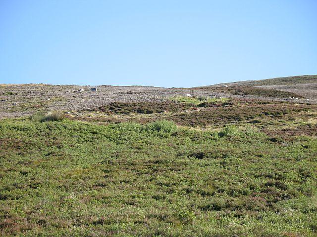 Cromdale moorland