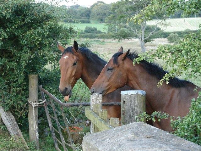 Horses on Bushelhead Road