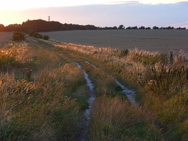 The Ridgeway above East Ilsley