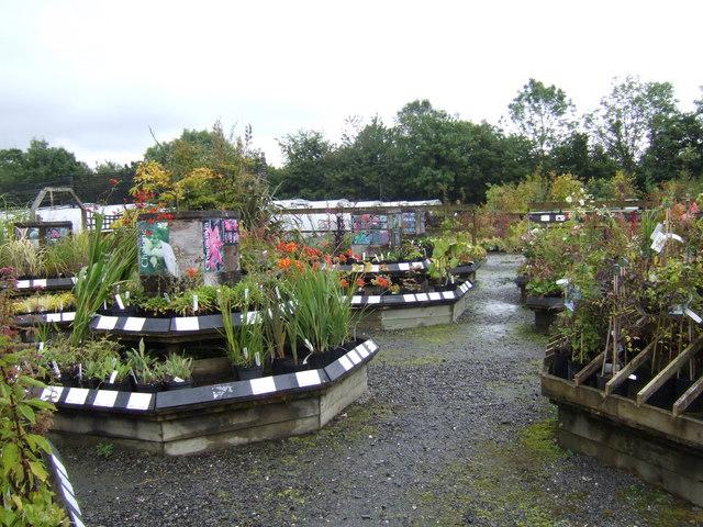 Plant display at Farmyard Nurseries