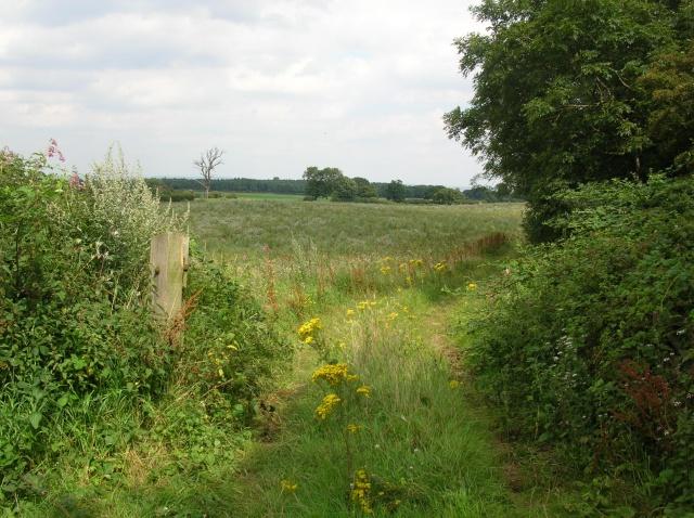Field track and brambles
