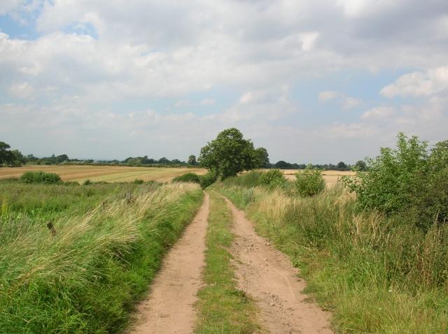 Rice Lane