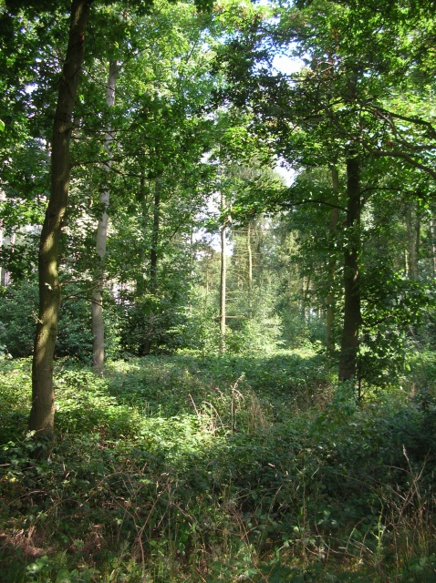 Woodland at The Haddocks