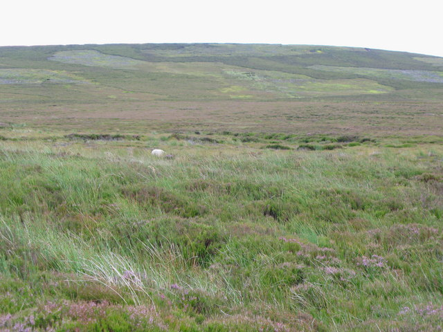 Horseshoe Plain