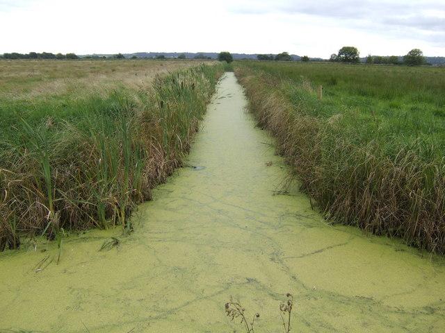 Drain on Butleigh Moor