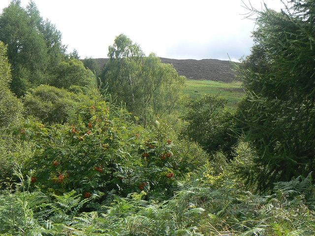 Woodland west of Cardney House