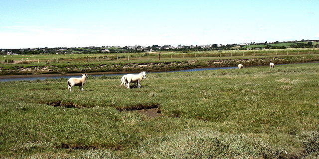 Sheep on the ait