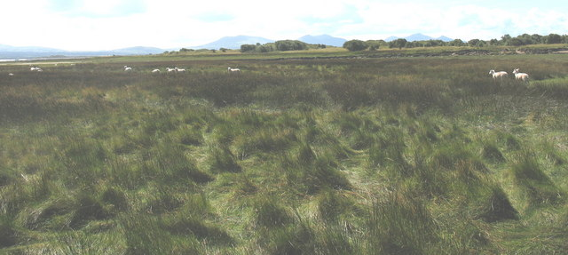 Rough grazing on the Braint Marshes