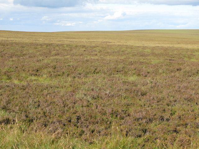 Moorland northeast of Shorngate Cross