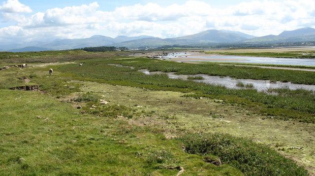 Estuarine marshland