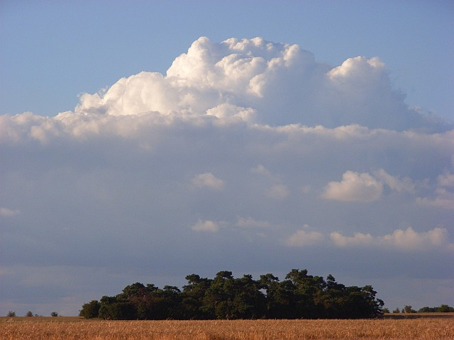 Copse and cumulus, Roden Downs
