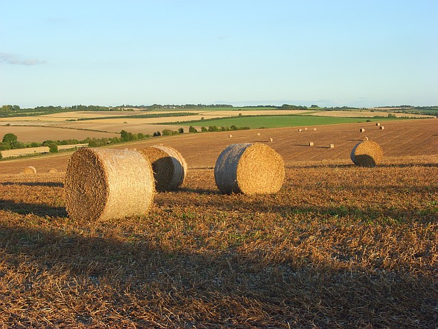 Bales of pea straw, Compton