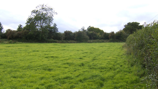 Pasture near Milestone Farm