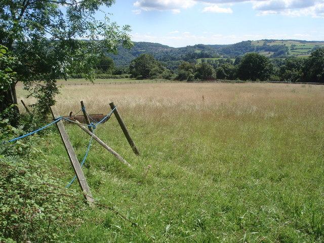 Meadow near Warren Farm