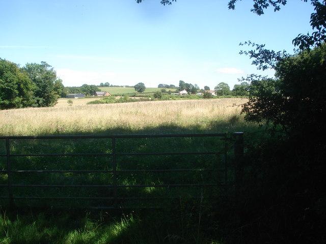 Meadows near Rose Farm