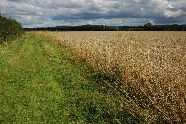 Field headland near Overbury