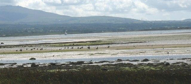 Wading birds at Aberbraint