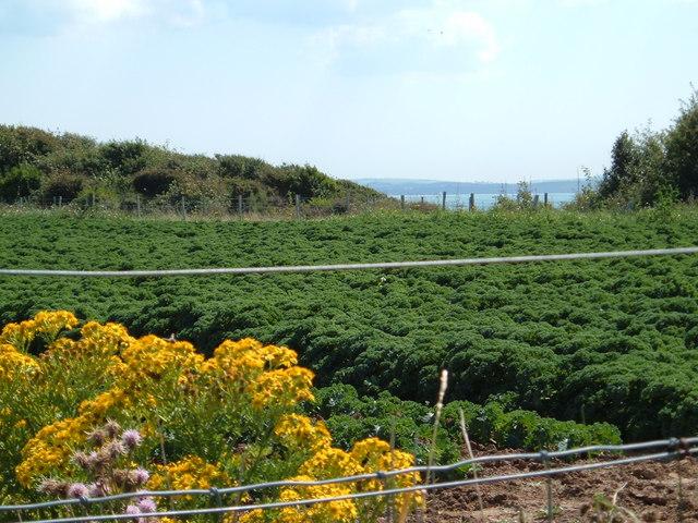 field on the coast