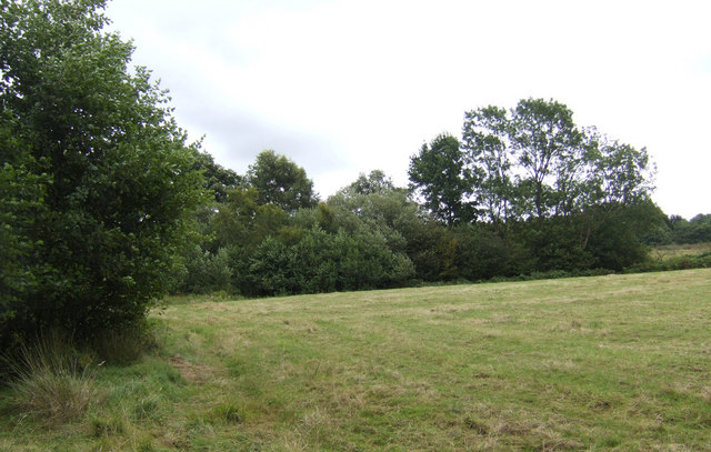 Hay field and woodland north of Oxley's Green