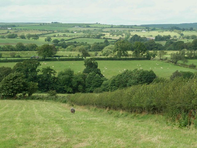 Fields near Cays House with view over Lyne Valley