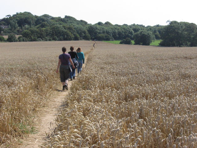 Public footpath through corn field