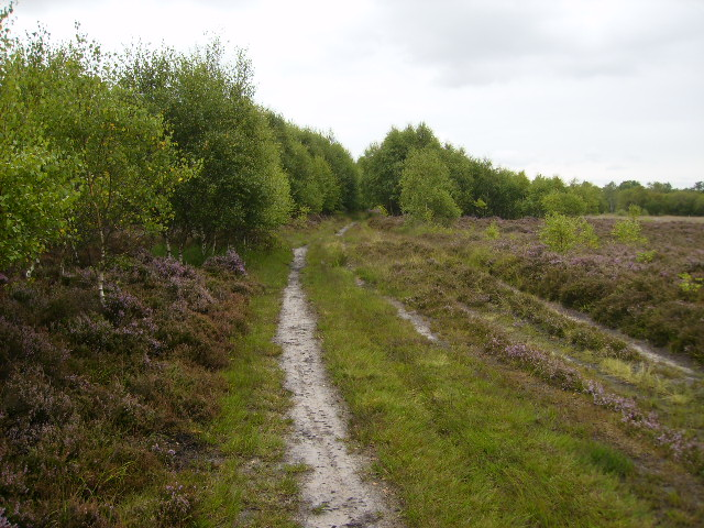 Track on Strensall Common near White Carr