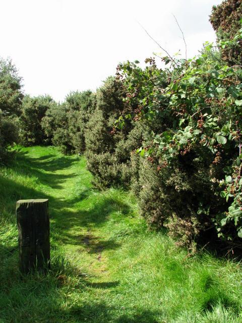 Footpath in Crostwight Heath