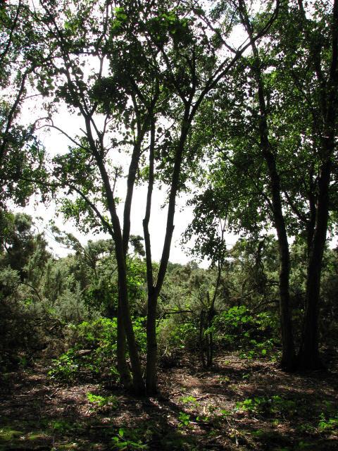 Woodland and Gorse, Crostwight Heath