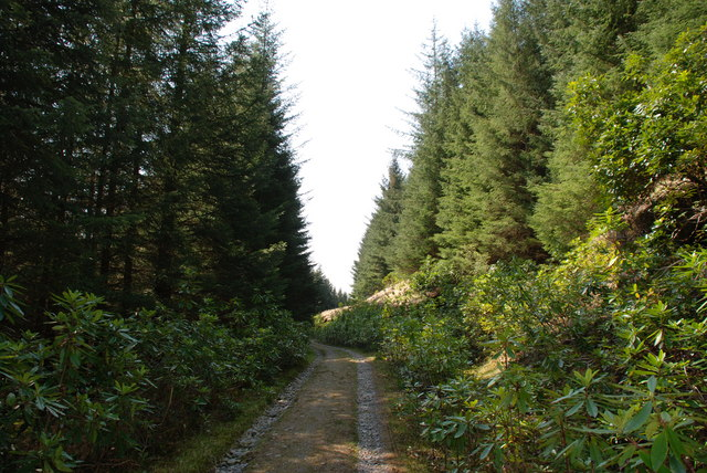 Glenetive Forest, at the Invercharnan Farm