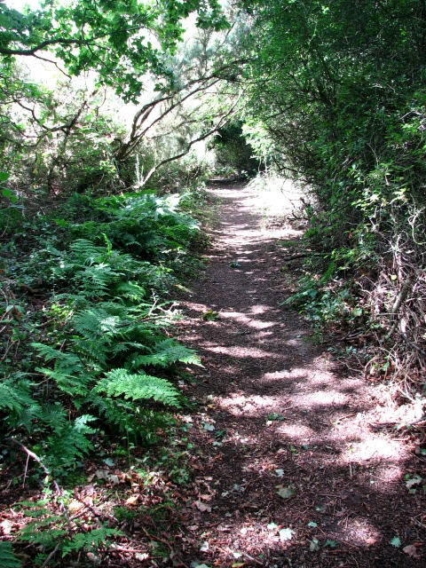 Shady path in Crostwight Heath