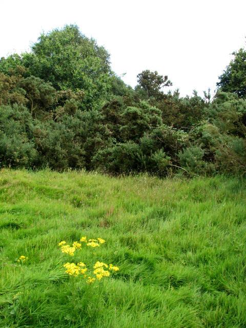 Crostwight Heath