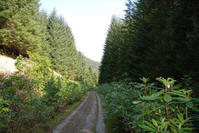 Glenetive Forest, near the Invercharnan Farm.