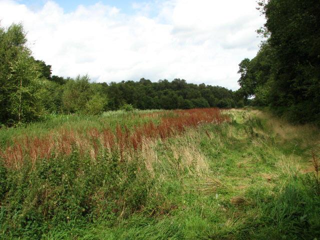 View to Crostwight Heath