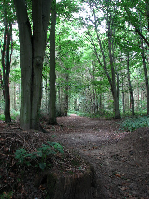 Footpath in Philip's Grove