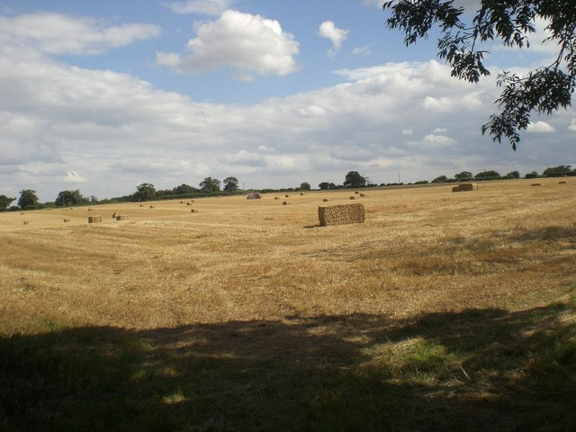 Baling west of Broomsthorpe