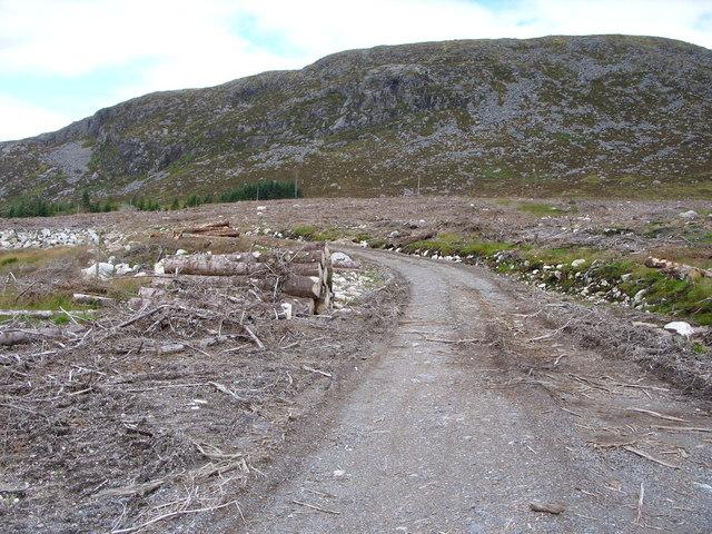 Forest road beside the Crochan Burn
