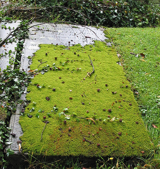 Moss-covered grave, St. Mary's, Newent.