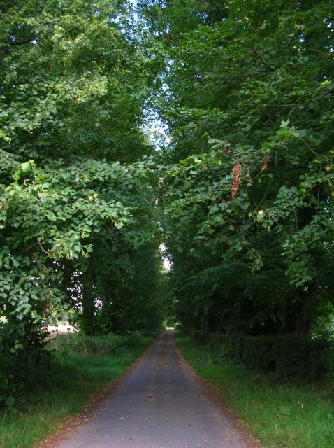 Lane near Helperby