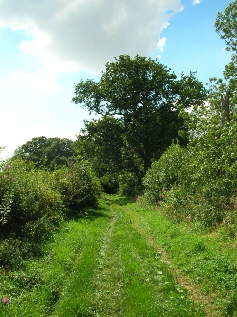 Bridleway from Brafferton