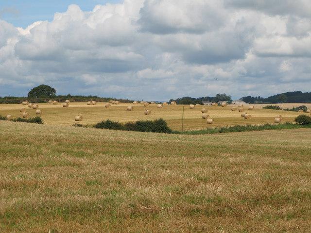 Hay bales near Haughton Strother Farm