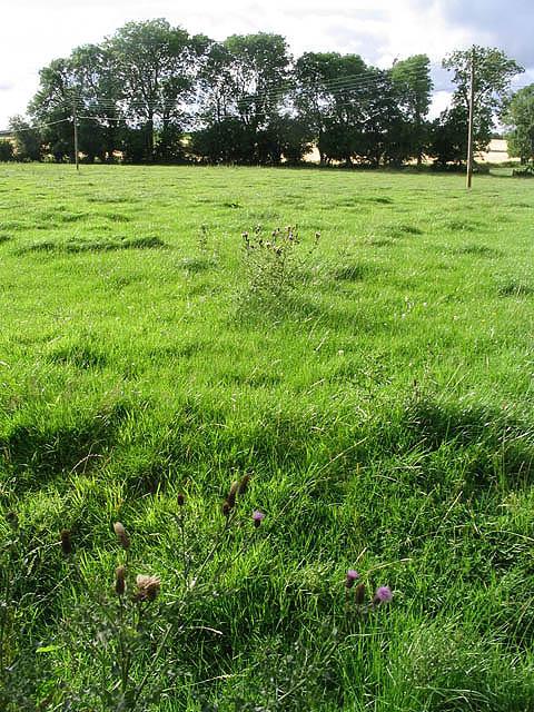 Pasture field at Upper Blainslie