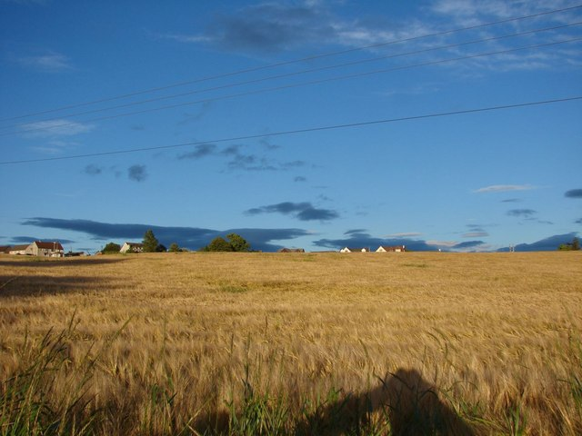 A field of barley at Cartland Village
