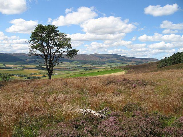 South slopes of Edinbanchory Hill