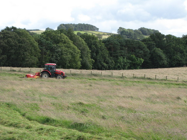 Cutting the hay