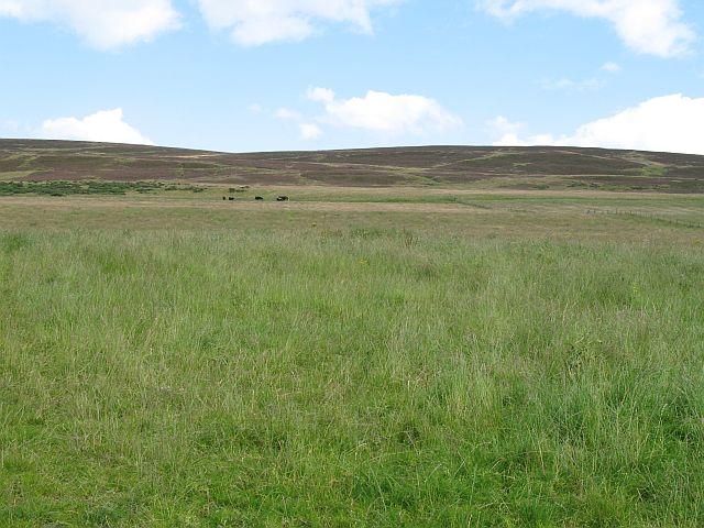 Grassland near Hillock of Echt