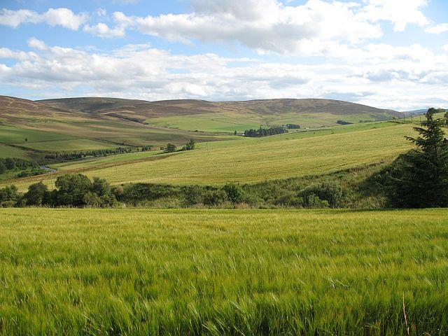 Barley, Greenloan