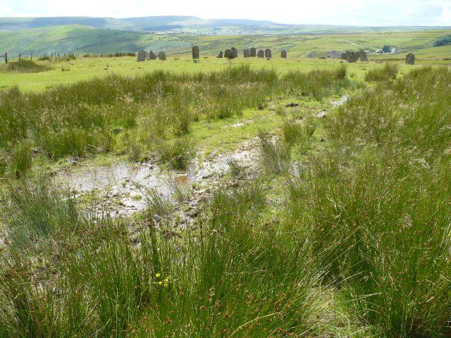 Bog near Cefn Golau