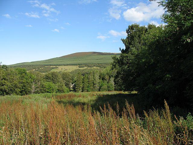 Weedy field near Beldorney Castle
