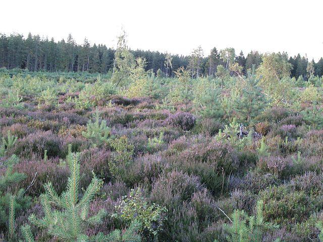 Carnach Wood